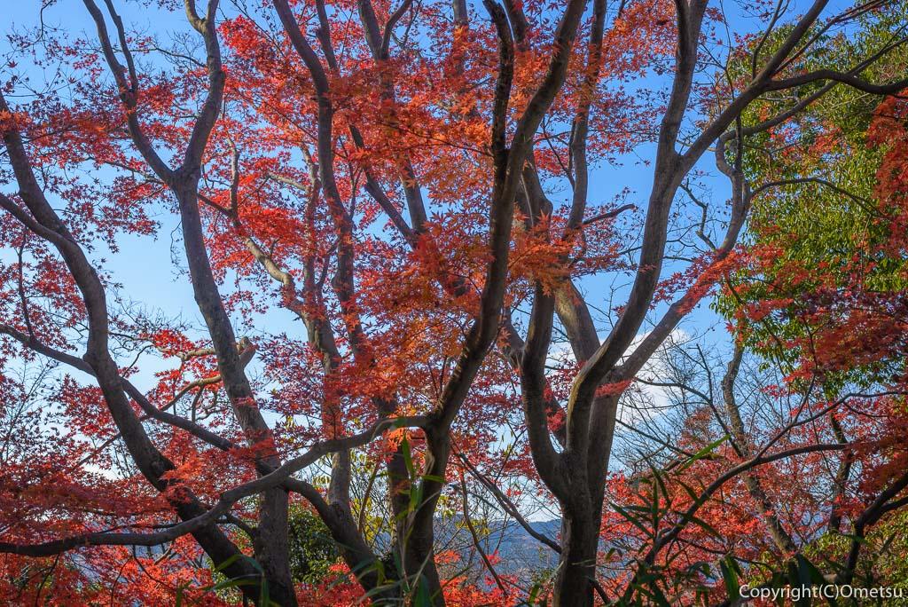 青梅市・永山公園の紅葉