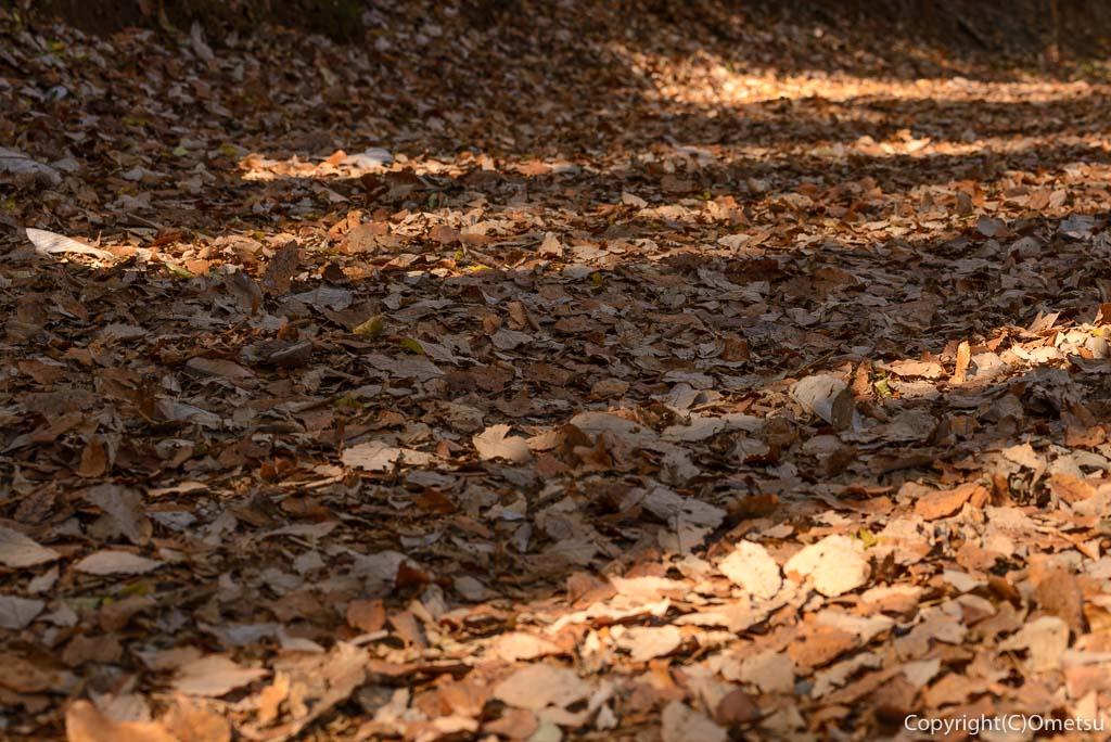 青梅の森の、落ち葉