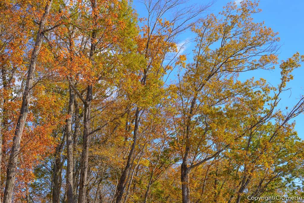 青梅の森の紅葉