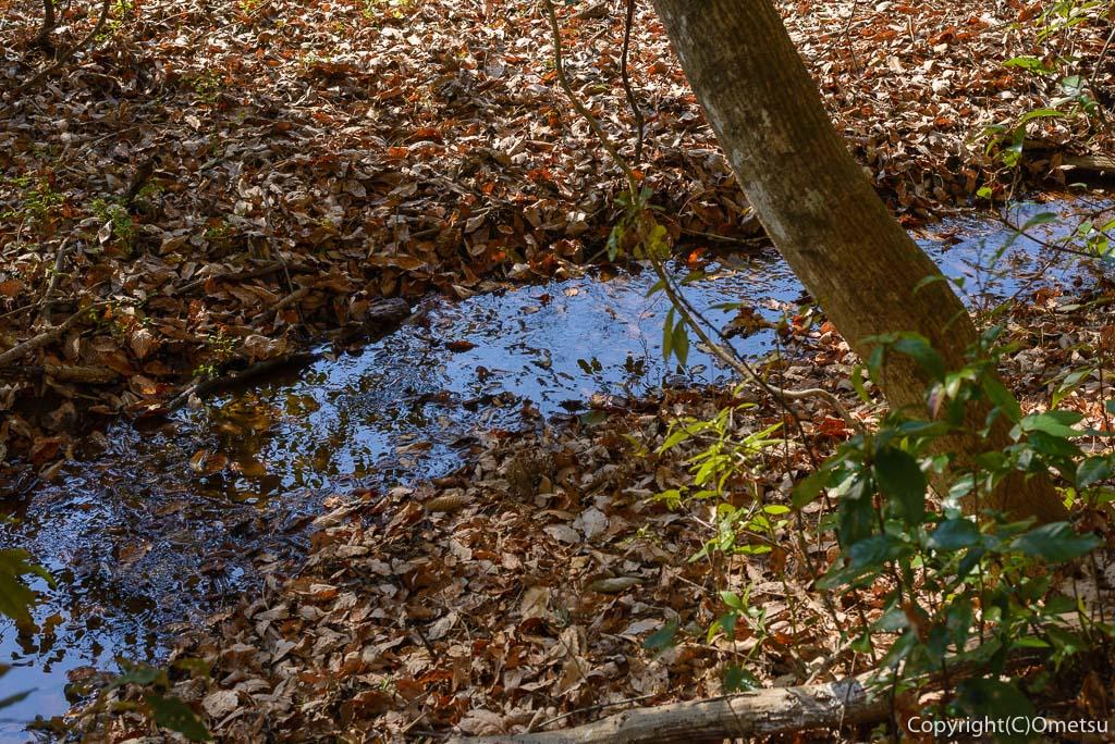 青梅の森の、小さな沢