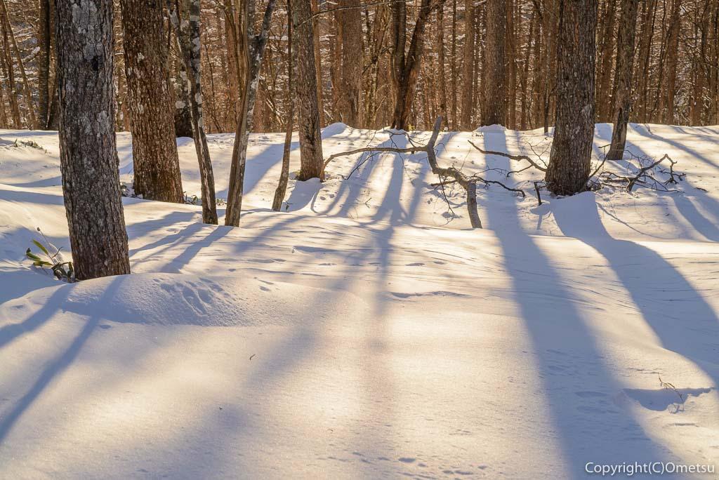 冬の雲取山の森
