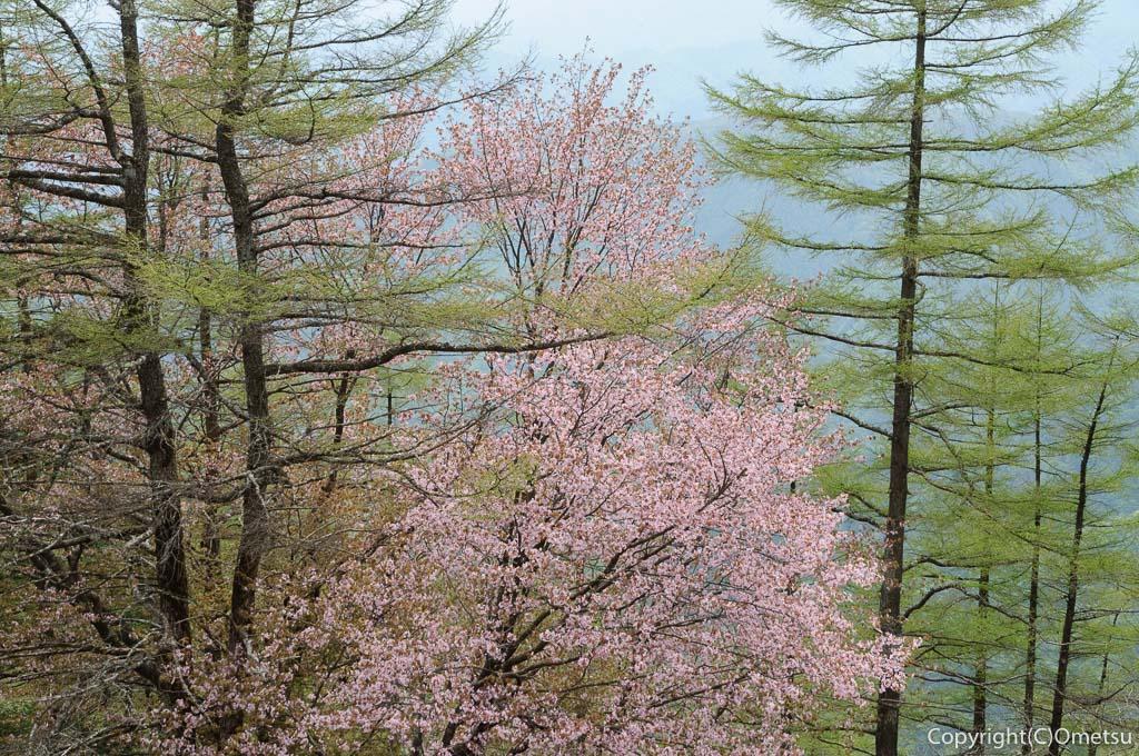 春の雲取山