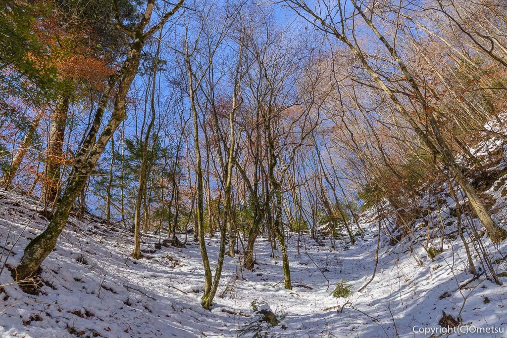 青梅市・御岳山の冬の広葉樹林