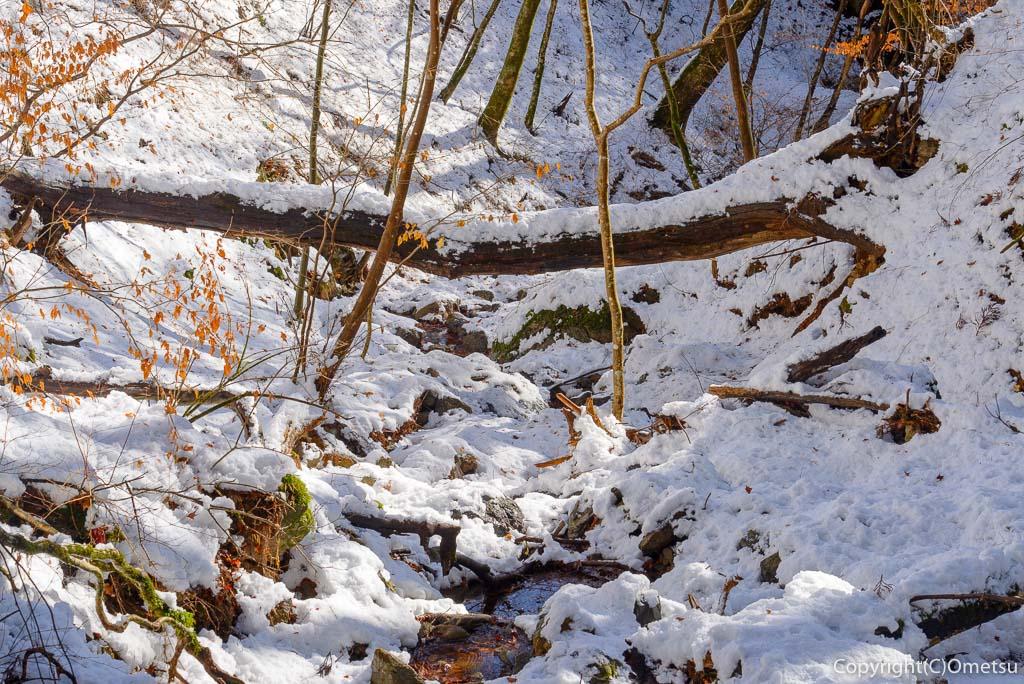 青梅市・御岳山の、雪の沢