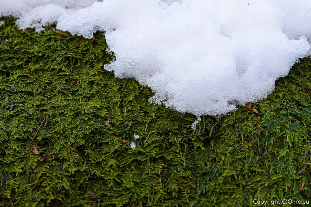 青梅市・御岳山ロックガーデンの、雪と苔