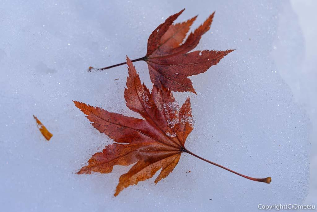 青梅市・御岳山ロックガーデンの、雪と落ち葉