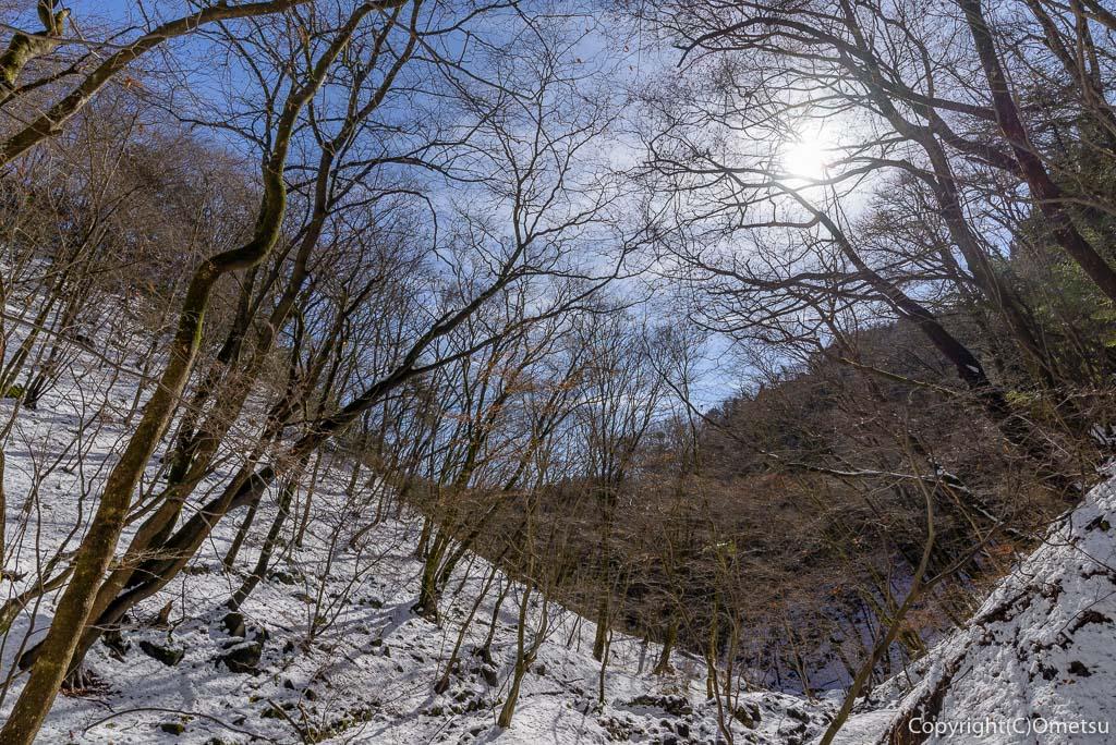 青梅市・御岳山・ロックガーデンの林