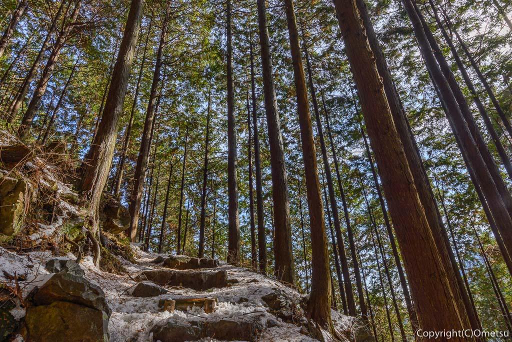 青梅市・御岳山の、七代の滝への道