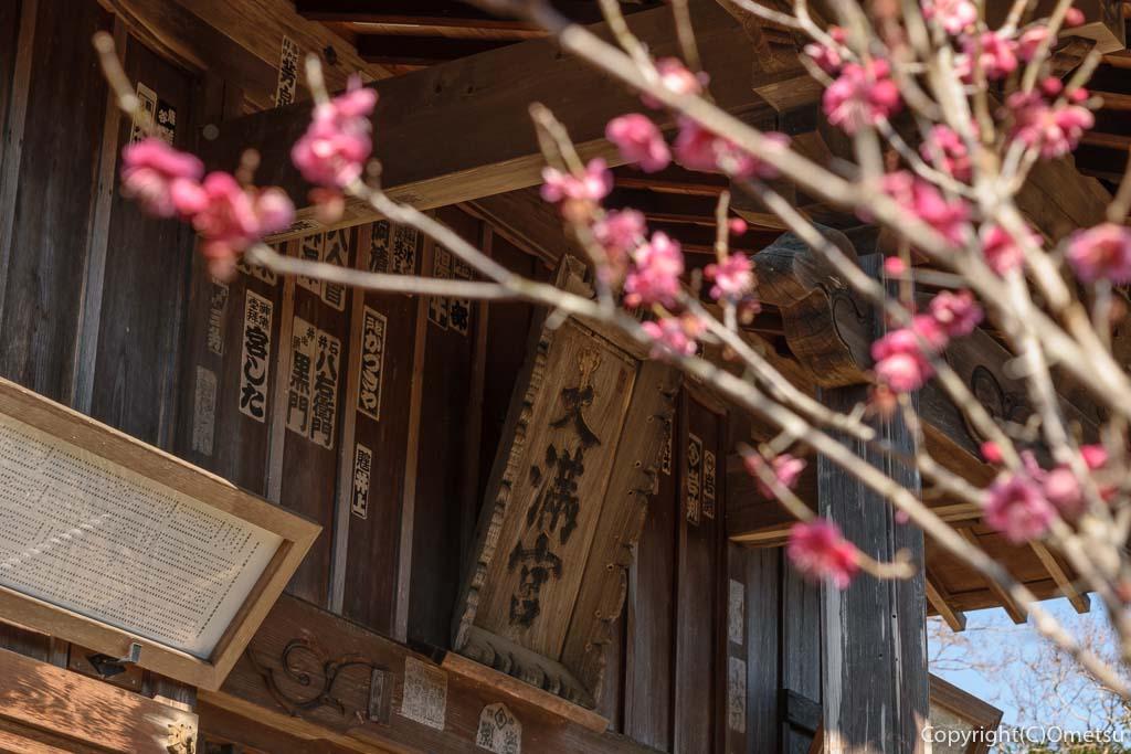 青梅市・梅郷の菅原神社と梅