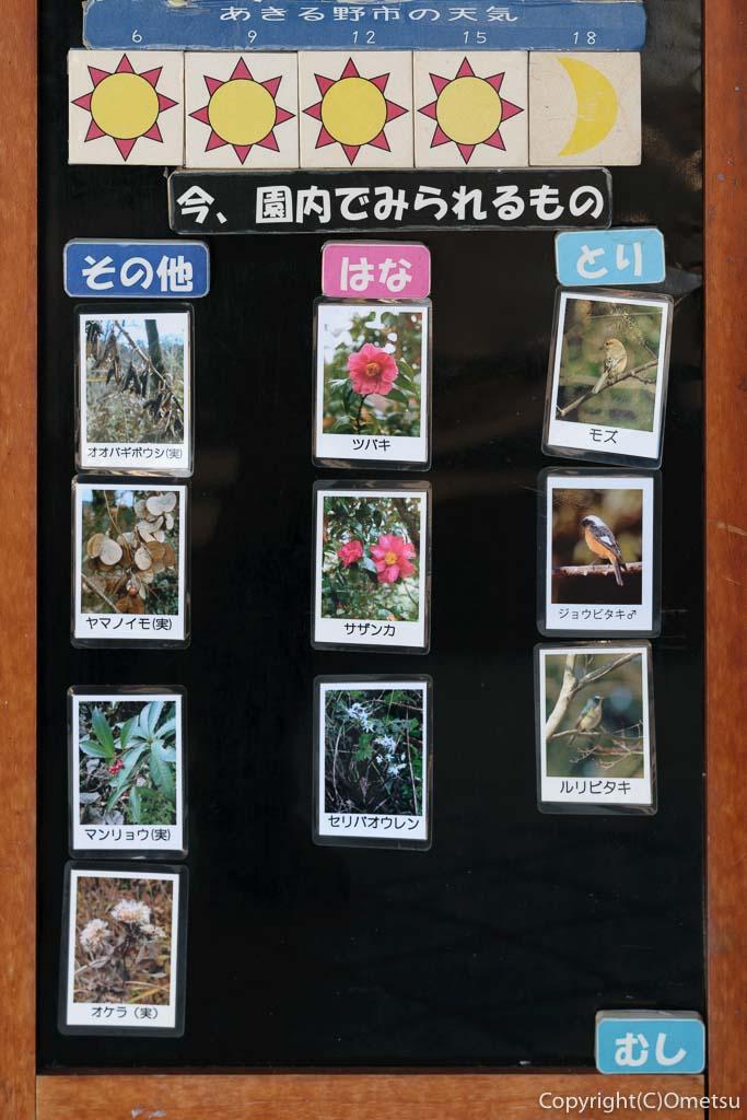 あきる野市・小峰公園の、2月上旬の園内情報