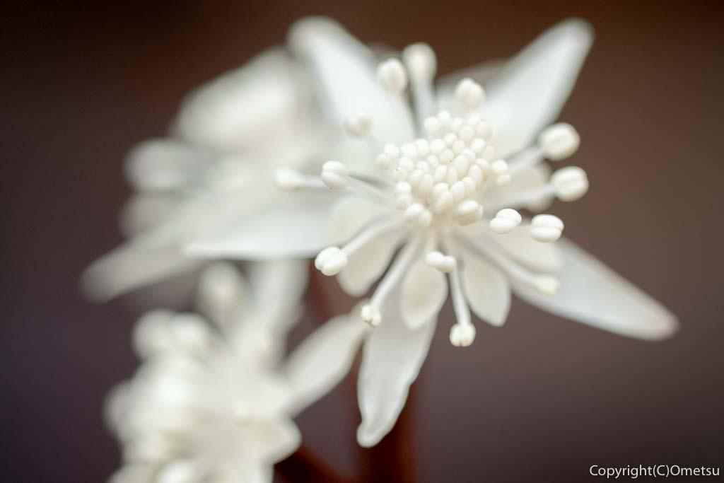 あきる野市・小峰公園の、セリバオウレンの雄花