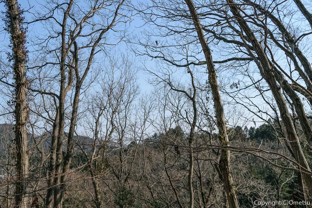 あきる野市・小峰公園の、雑木林