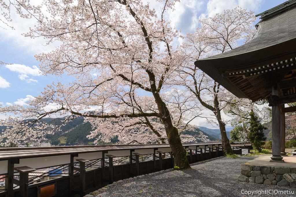 青梅市・海禅寺の染井吉野の桜