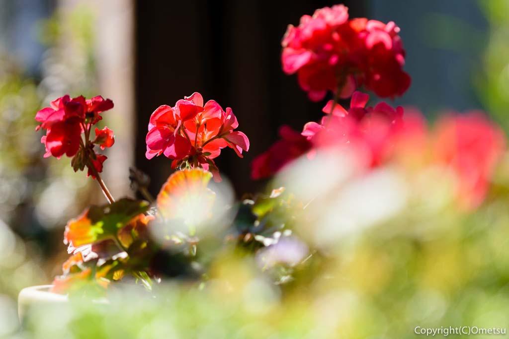 羽村の洋食料理店・LARGO(ラルゴ)の庭の花