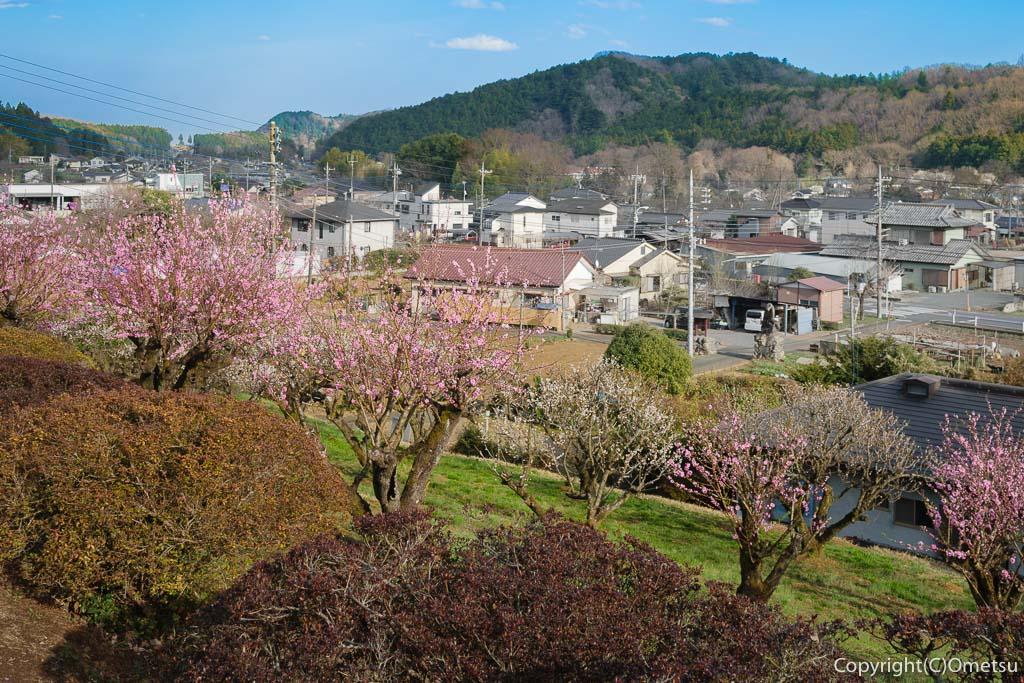 青梅・成木の春