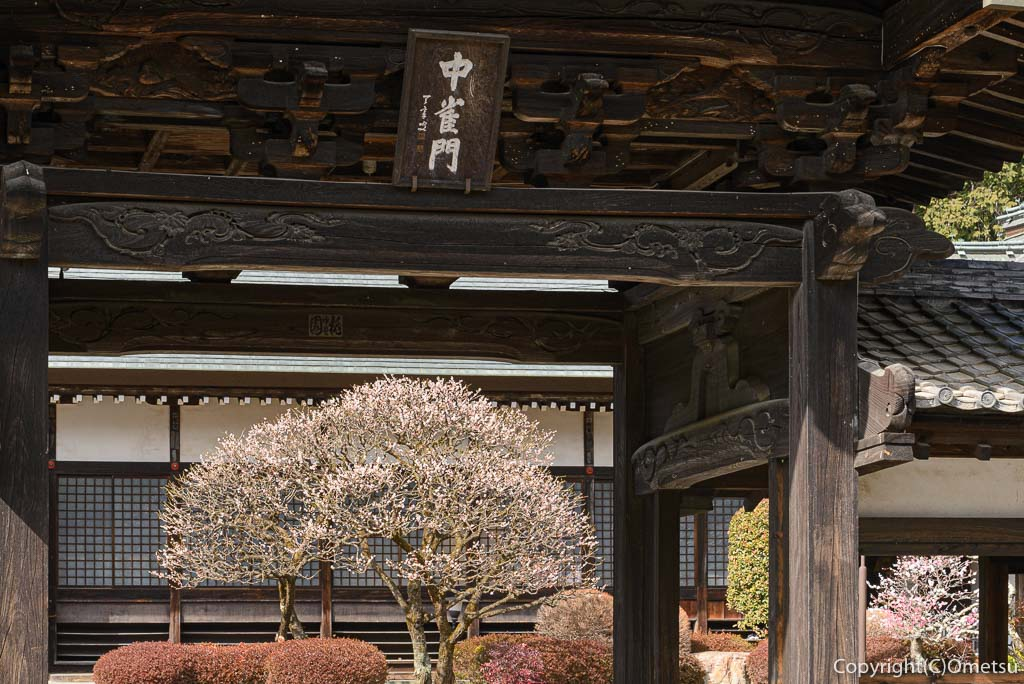 青梅市、天寧寺の中雀門と、梅の花