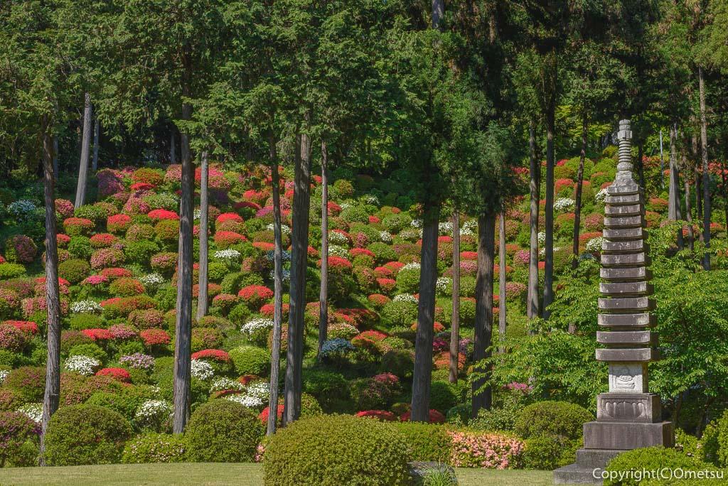 青梅市・薬王寺のツツジの庭