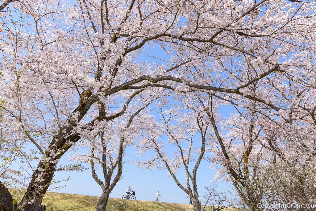 福生市・明神下公園から、多摩川堤防を望む