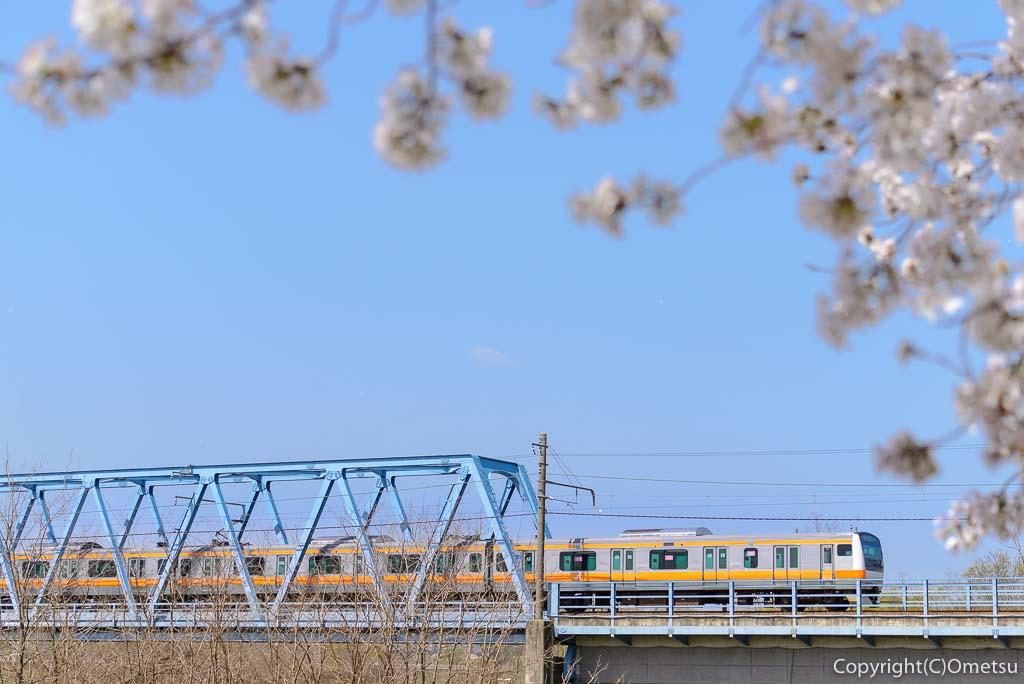 多摩川堤防の桜と、JR五日市線の鉄橋