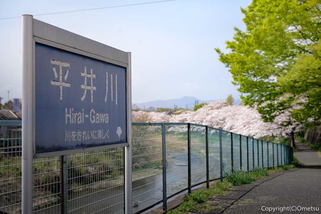 あきる野市・平井川の遊歩道