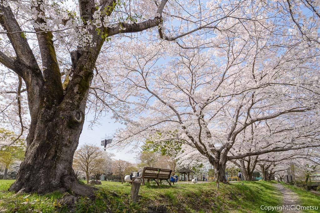 あきる野市・草花公園の桜並木