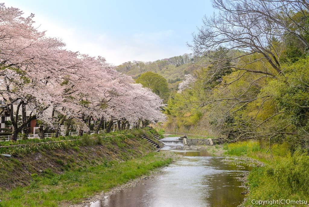 日の出町・平井川付近の桜並木
