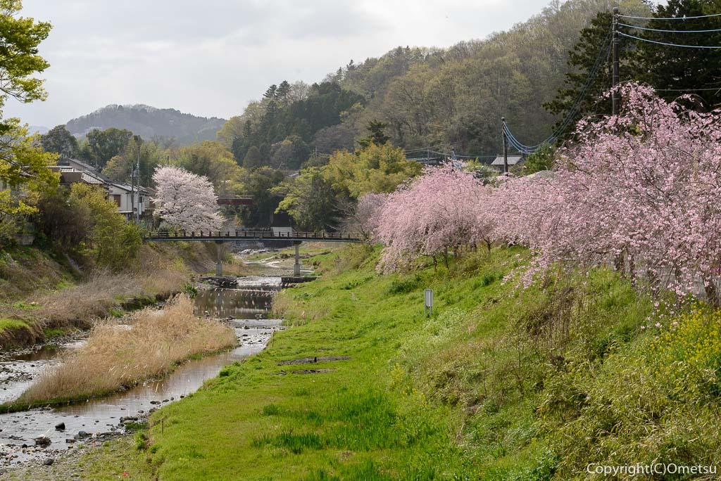 日の出町・千石橋からの、しだれ桜