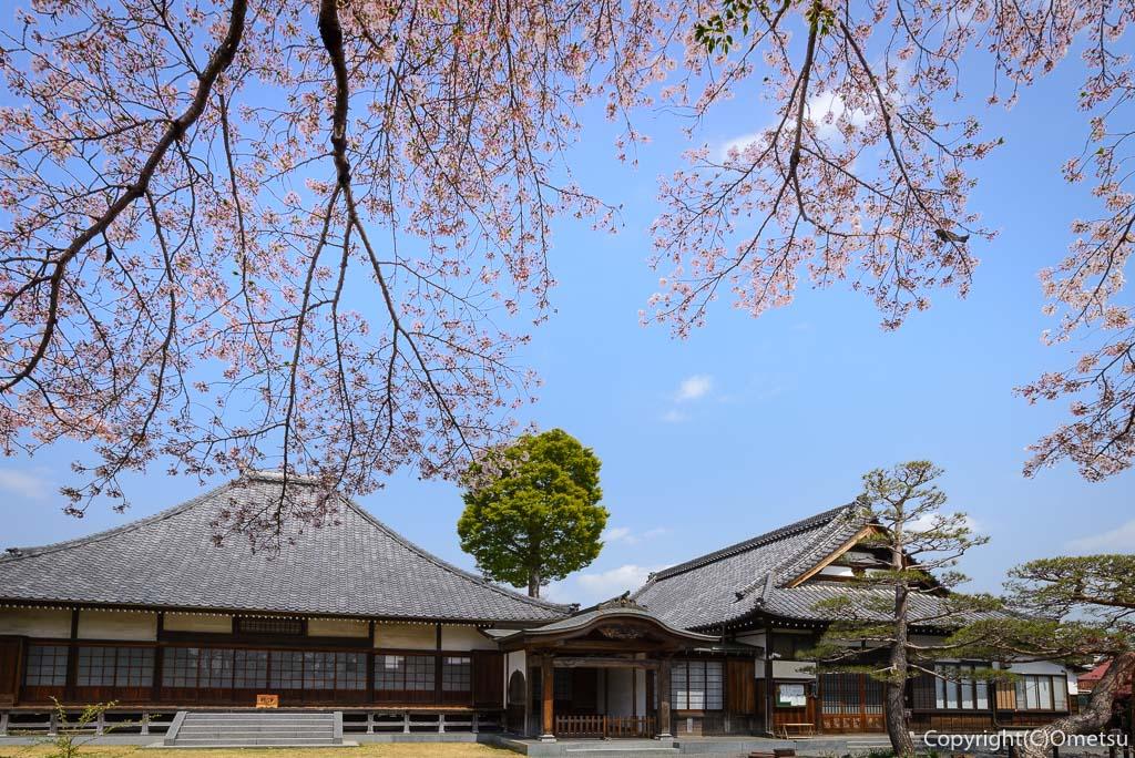 あきる野市・普門寺の本堂と、ソメイヨシノ