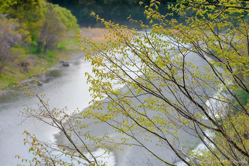 青梅市・調布橋からの多摩川からの新緑