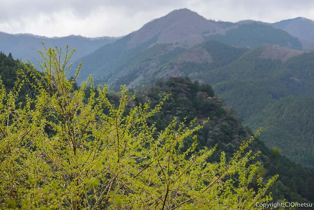 奥多摩町、新緑と山々