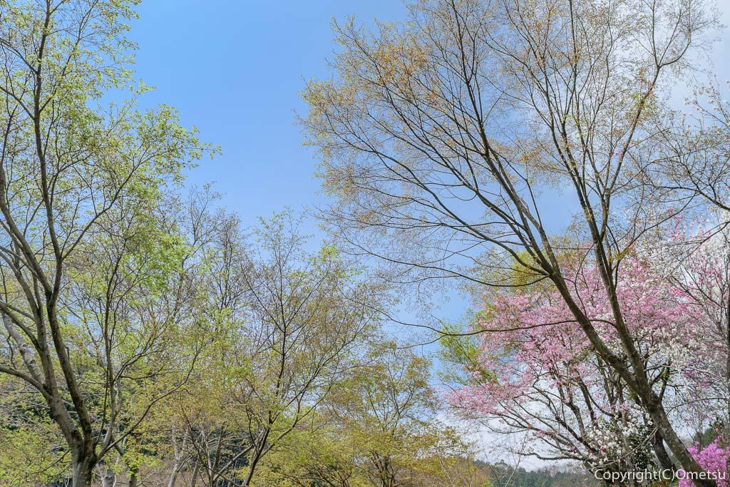 あきる野市・乙津の、新緑