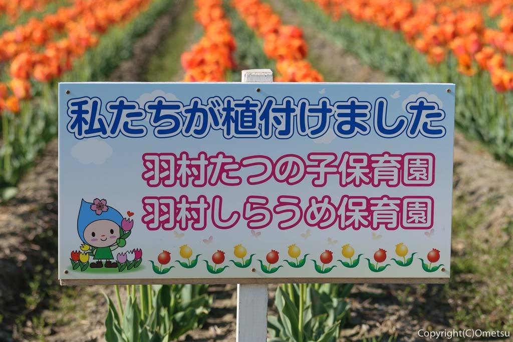 羽村市・根がらみ前水田のチューリップ畑の保育園の植え付け看板
