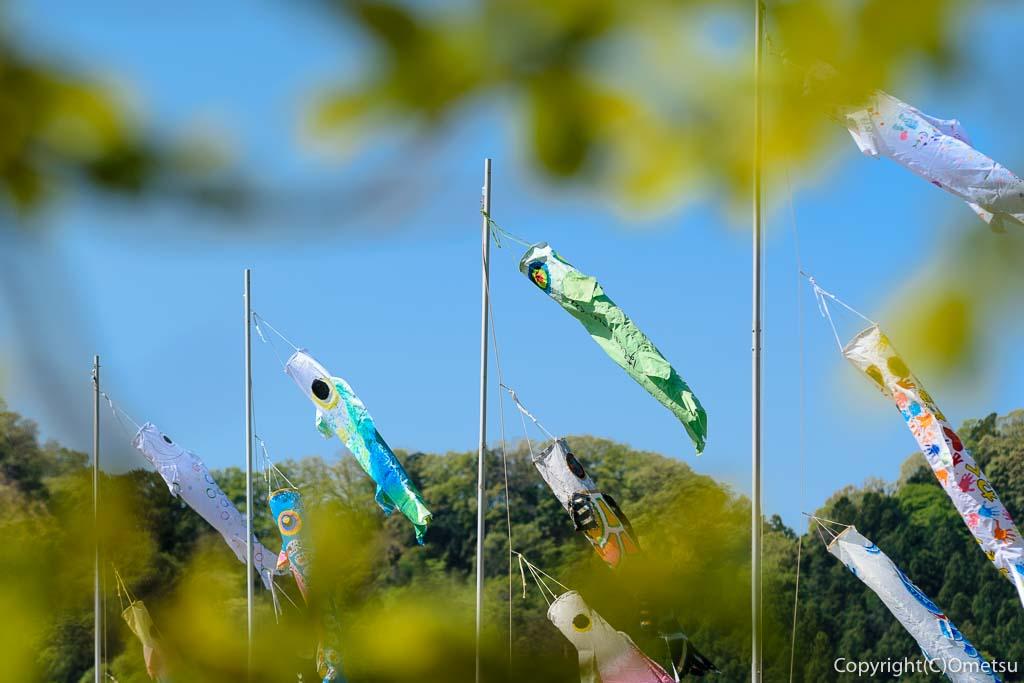 羽村市・踊子草公園からの鯉のぼり
