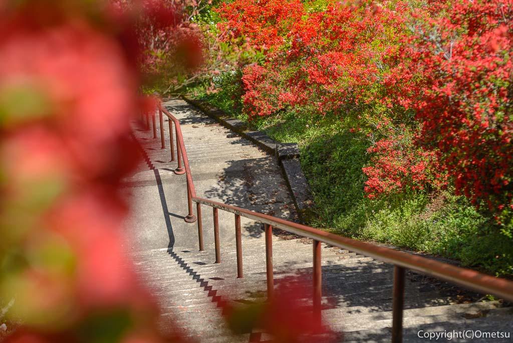 青梅市・愛宕神社の出世階段の、石段とツツジ