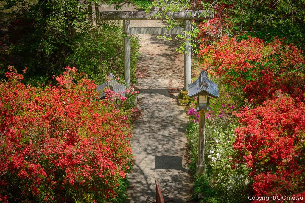 青梅市・愛宕神社の出世階段のの、石段と鳥居とツツジ