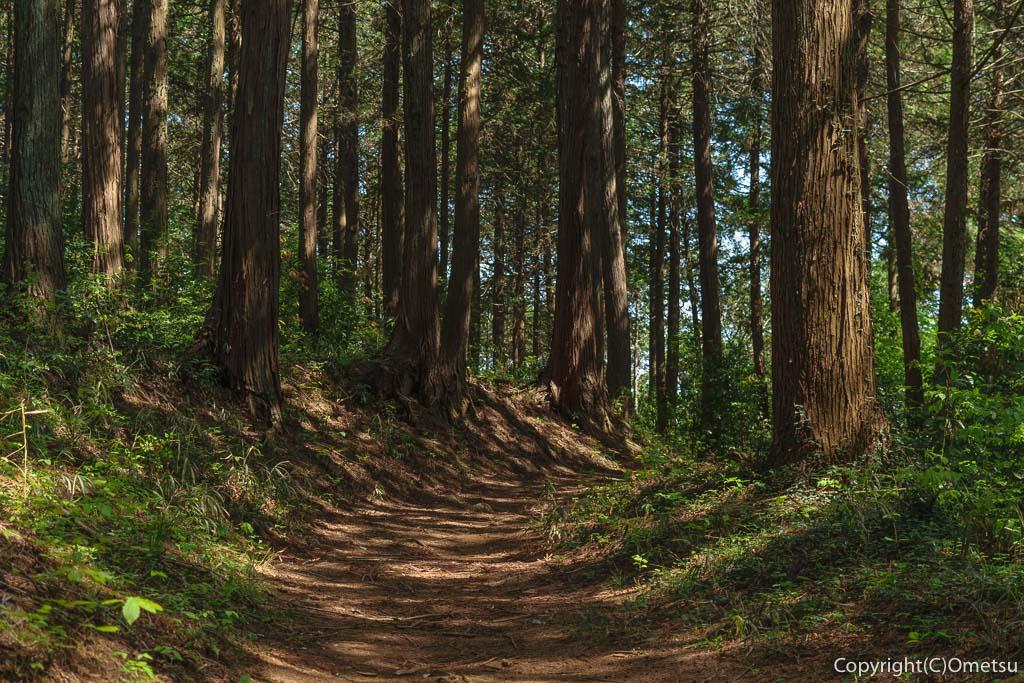 青梅市・七国峠から薬王寺への山道の森