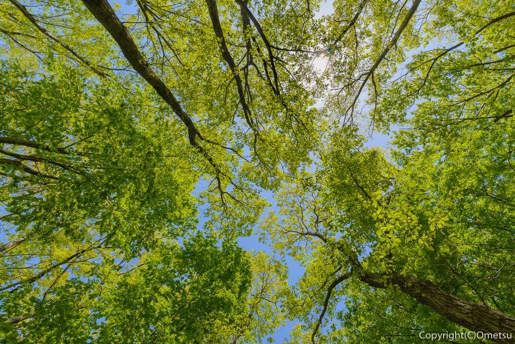 青梅市・霞丘陵ハイキングコースの新緑