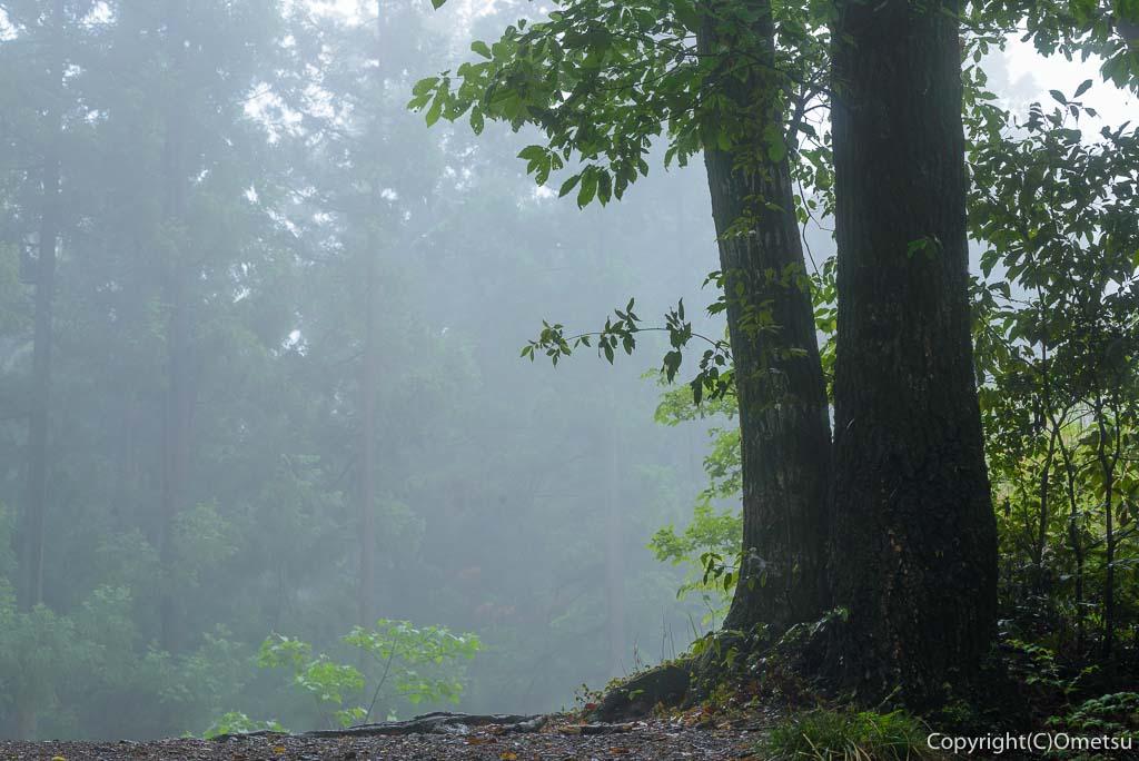青梅の森・霧の風景