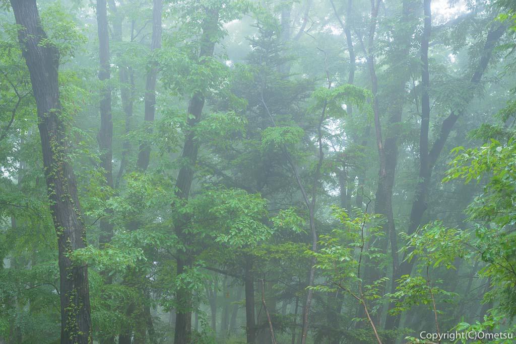 青梅の森・霧の雑木林