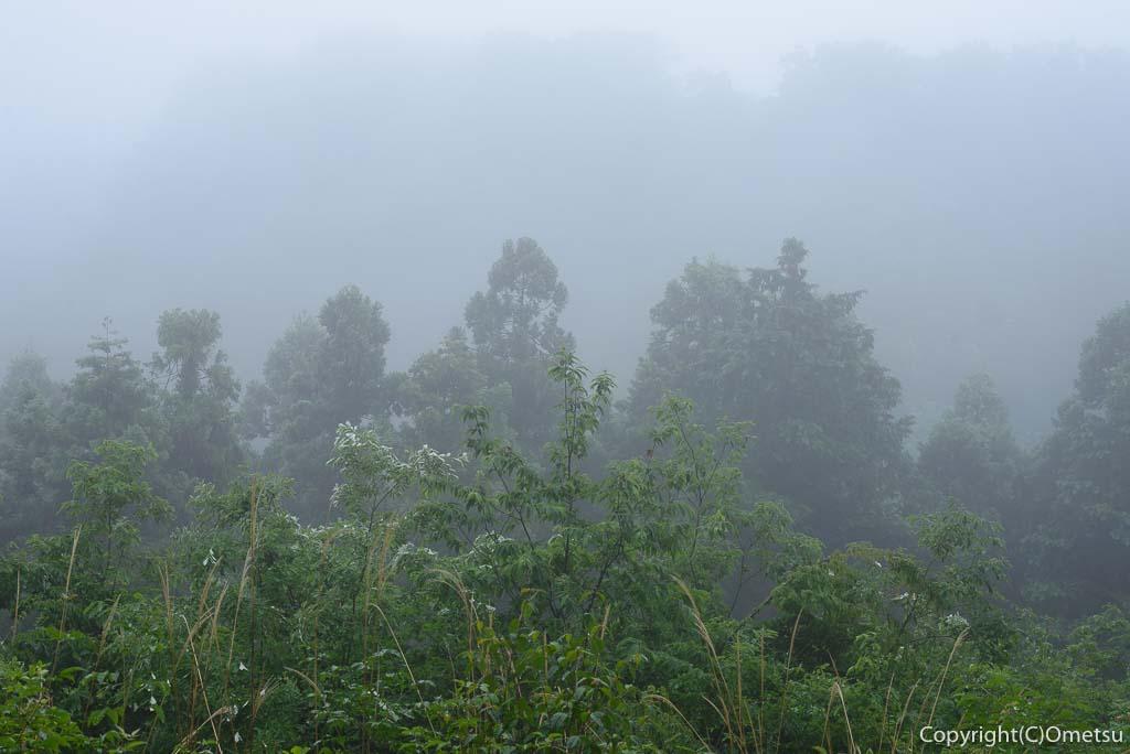 青梅の森・展望台・霧の森