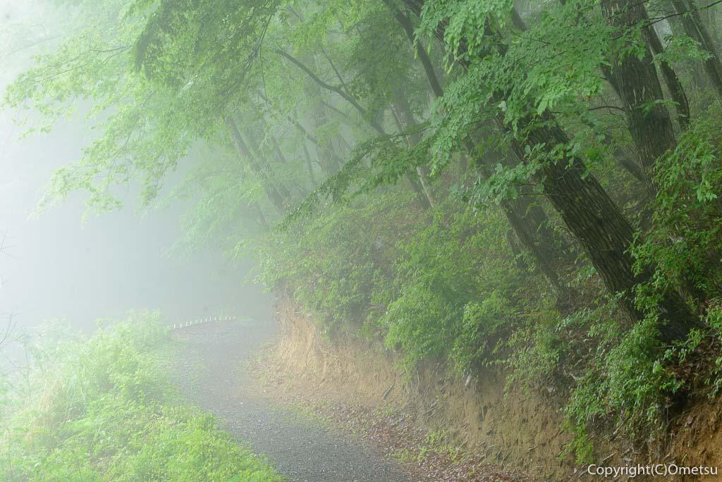 青梅の森・霧の道