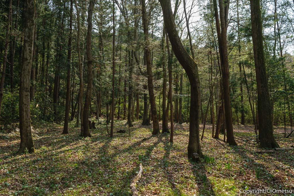 青梅市・内沼きのこ園の、雑木林