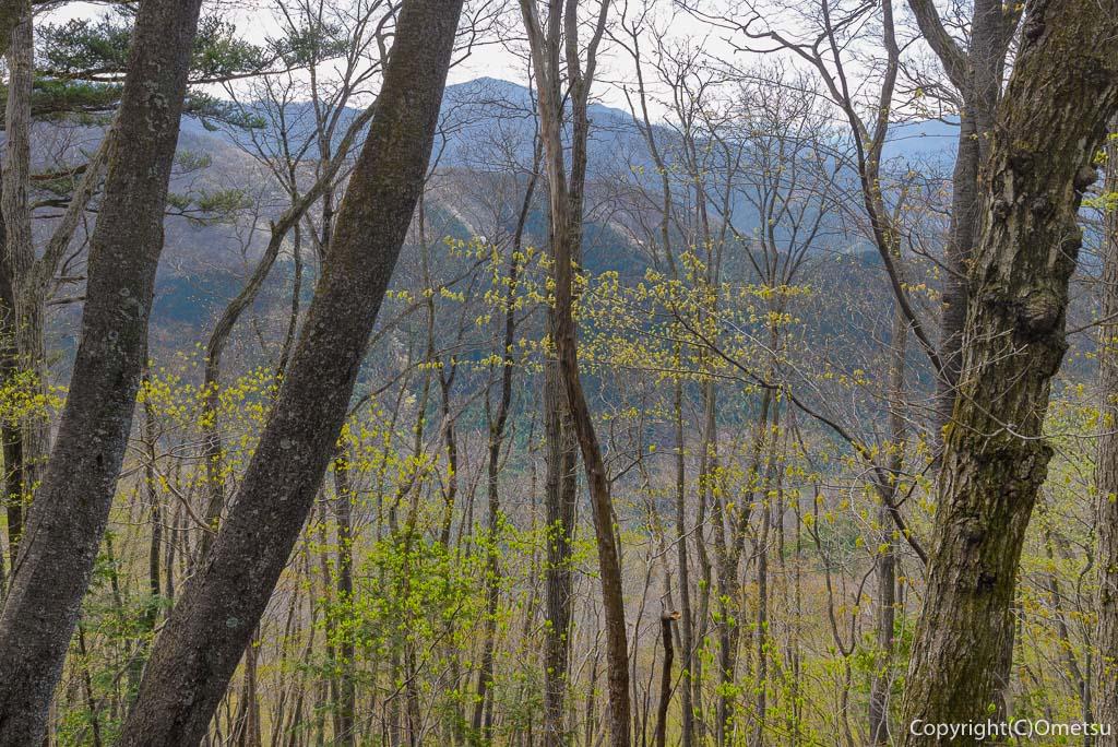 奥多摩町・大塚山・御岳山の黒五郎新道の展望と広葉樹の新緑
