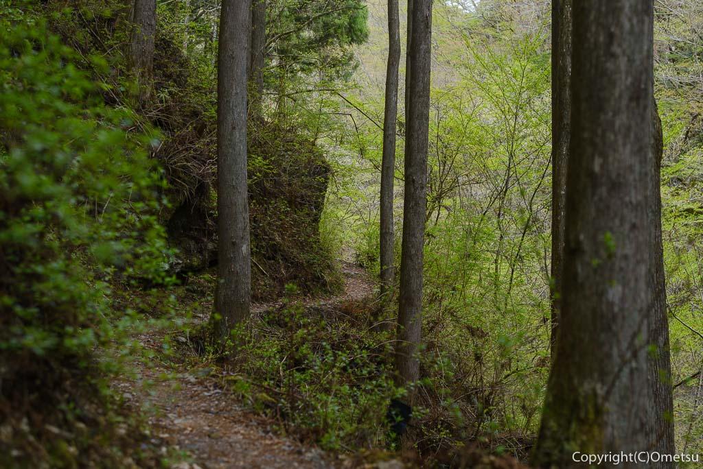 奥多摩町・川苔山の登山道