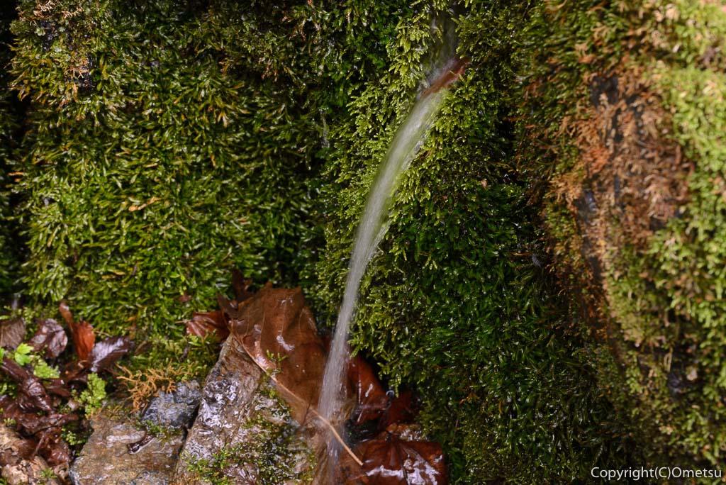 奥多摩町・川苔山の登山道の、湧水