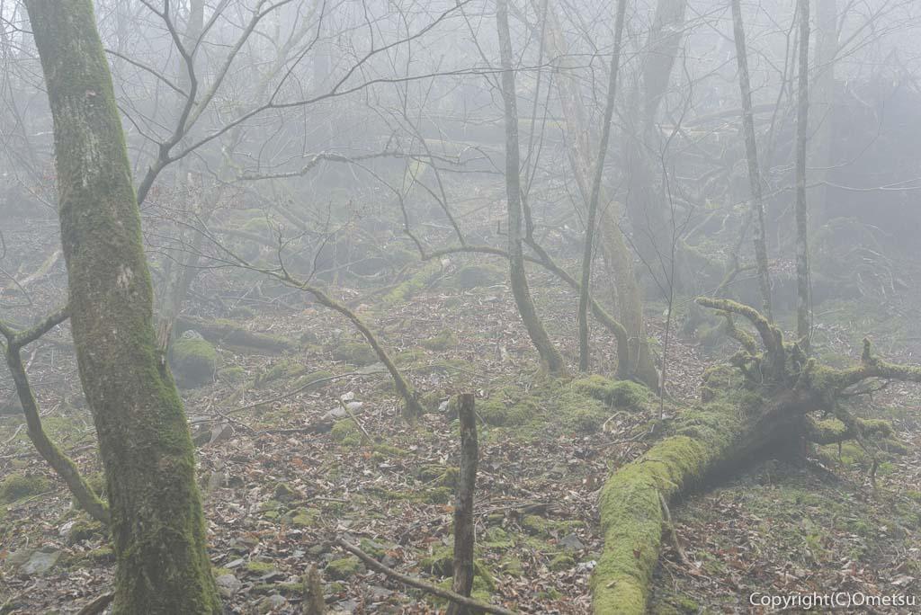 奥多摩町・川苔山の霧の森