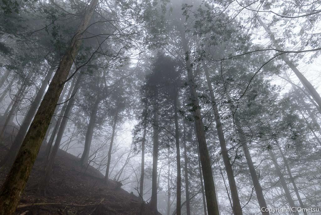 奥多摩町・川苔山の霧の針葉樹林