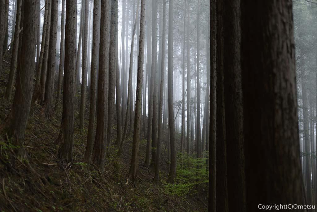 奥多摩町・川苔山・赤抗尾根の霧の杉林