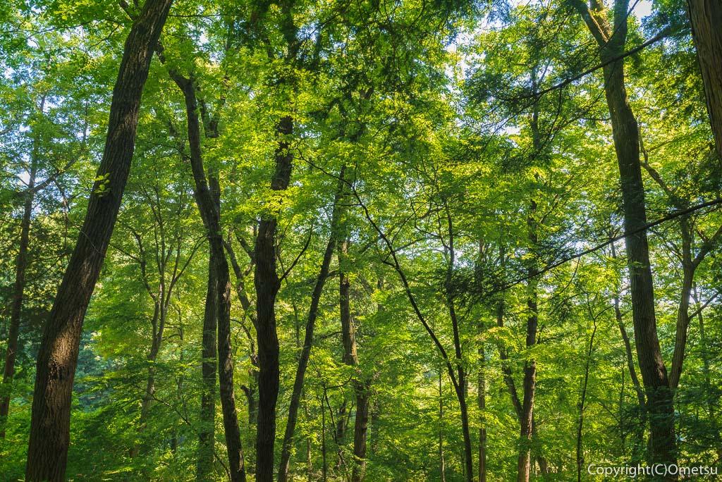 青梅市・吹上しょうぶ公園近くの、勝沼城の森