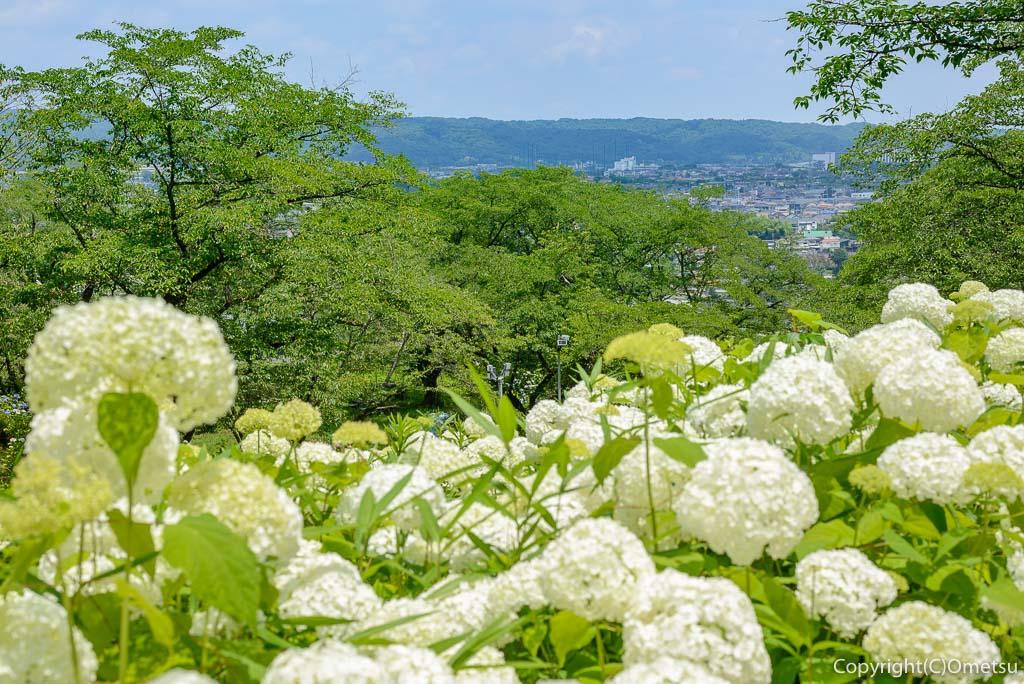 あきる野市「わんダフルネイチャーヴィレッジ」のアジサイ、アナベルの雪山と展望